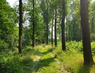 Beautiful forest walk in Velp