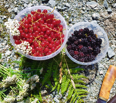 Red currant and blackberries.
