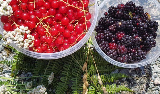 WILD FOOD: BERRYCRUMBLE
